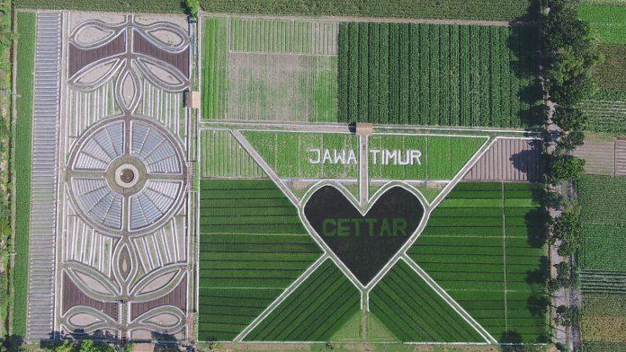 Menengok Seperti Apa Fenomena Crop Circle Yang Viral di Kediri
