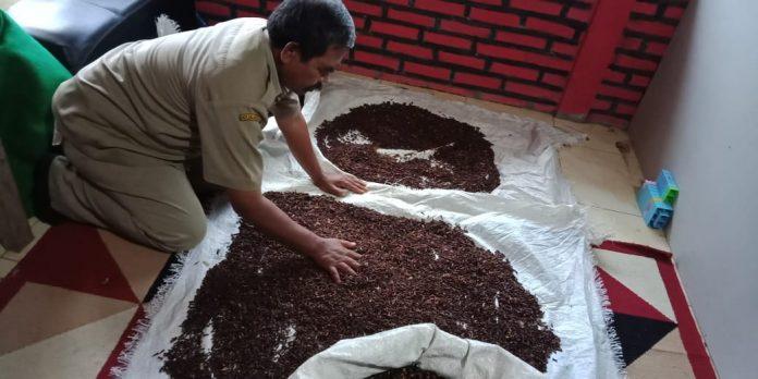Petani di Desa Jugo sedang proses pengeringan cengkeh