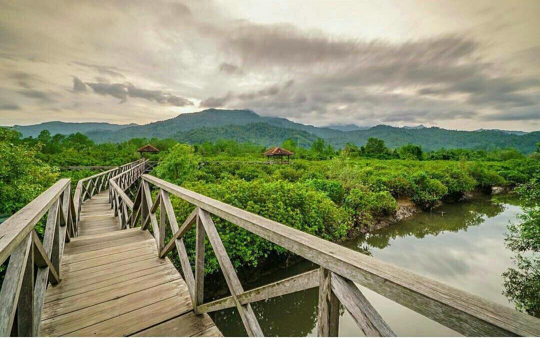 Menyusuri Jembatan Galau Di Kawasan Hutan Mangrove Trenggalek